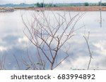dead trees perennial with... | Shutterstock . vector #683994892
