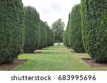 rows of topiary cones of yew... | Shutterstock . vector #683995696