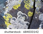detail  close up  of a yellow... | Shutterstock . vector #684033142