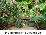 the vallee de mai palm forest   ... | Shutterstock . vector #684035605