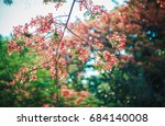 colorful flowers | Shutterstock . vector #684140008