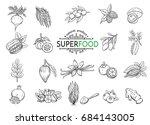 vector hand drawn sketch... | Shutterstock .eps vector #684143005