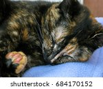 Small photo of Tortoiseshell female cat sleeping on cover
