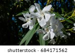 white oleander flowers on dark... | Shutterstock . vector #684171562