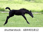 Small photo of Little foal in the game master their body