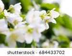 white flowers with raindrops... | Shutterstock . vector #684433702