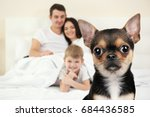 dog and happy family on... | Shutterstock . vector #684436585