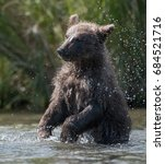 Small photo of Alaskan brown bear cub splashing and playing in Brooks River in Katmai National Park, Alaska