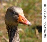 Goose Head Portrait
