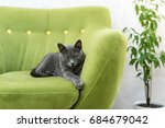 Cute Gray Cat Laying Stretched...