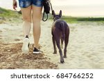 Stock photo young girl walking with her dog xoloitzcuintli on sand beach at sunset 684766252