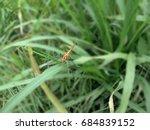 Odonata In Cisanti Lake
