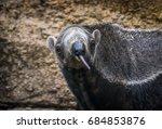 giant anteater | Shutterstock . vector #684853876