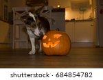 halloween pumpkin with small dog | Shutterstock . vector #684854782