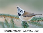 Crested Tit  Cute Songbird Wit...