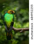 golden headed quetzal ... | Shutterstock . vector #684952255