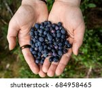 two hands are holding a handful ... | Shutterstock . vector #684958465