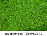 Small photo of Moss, (Phylum Bryophyta) gametophyte