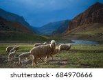 a herd of sheep cross the field ...   Shutterstock . vector #684970666