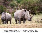 white rhinoceros aka square... | Shutterstock . vector #684992716