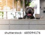 the cute pit bull terrier puppy ...   Shutterstock . vector #685094176