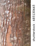 detail of tree bark texture for ... | Shutterstock . vector #685130665