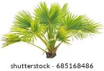 young  palm on isolate... | Shutterstock . vector #685168486