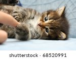 Stock photo kitten 68520991