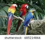 Scarlet Macaw Green Winged...