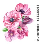 pink pansy and anemones flowers ... | Shutterstock . vector #685230055