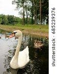 swan   Shutterstock . vector #685239376