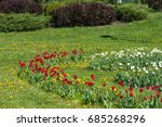 spring landscape with flowers.... | Shutterstock . vector #685268296