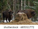 wild european bison graze near... | Shutterstock . vector #685311772