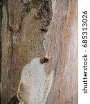 Small photo of Close up textured of Eucalyptus tree. (Eucalyptus globulus Labill.)