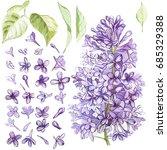 set of hand drawn watercolor... | Shutterstock . vector #685329388