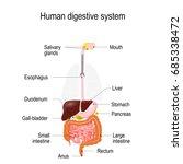 human digestive system.... | Shutterstock . vector #685338472