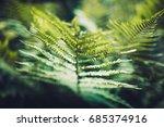 texture of plants in summer | Shutterstock . vector #685374916