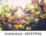 texture of plants in summer | Shutterstock . vector #685374946