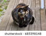 Small photo of Cute small tortoiseshell female kitten, black and red, attentive and playing