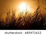 the silhouette of wheat against ... | Shutterstock . vector #685471612