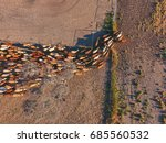 Aerial View Of Outback Cattle...