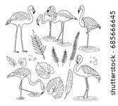 set of outline flamingos... | Shutterstock .eps vector #685666645