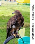 Small photo of Golden eagle