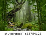 tropical jungle | Shutterstock . vector #685754128