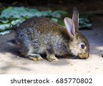 Stock photo rabbit in the cage rabbit small rabbit small bunny rabbit 685770802