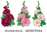 vector bunch with outline alcea ... | Shutterstock .eps vector #685855066