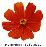 red flower kosmeja white...   Shutterstock . vector #685868116