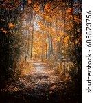 Autumn Colors Path       ...