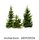 Picture Of Two Spruces And A...