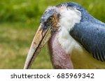 marabou stork  | Shutterstock . vector #685969342